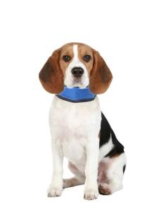 Bandana Rinfrescante per Cani taglia M regolabile 25-45 cm